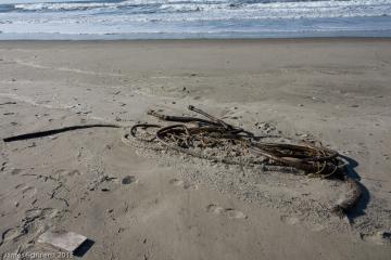More bull kelp strands