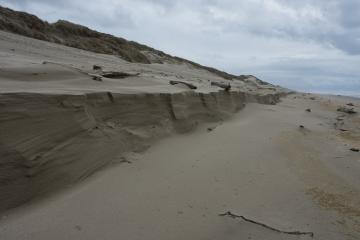 Approx 1/8 mile south of parking lot 4 access, 4 to 5 foot cut in dune from beach level
