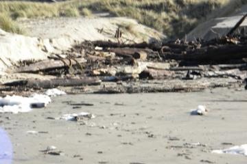 Stream to beach clogged with logs and debris by recent storm activity.