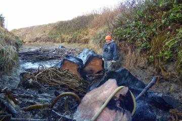 The McPhillips Park access road was completely blocked by logs and kelp and debris