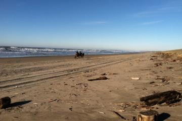 A sunny day at the beach, with debris and horses, looking north.