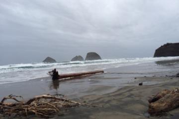 Larger log debris than usual