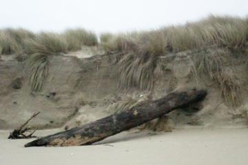 Log is either uncovered or has been pushed up and into the dune face.