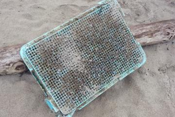 We found a crate covered with barnacles. We looked but could find no markings of origin.