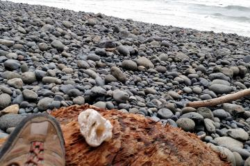 The wave action on this rocky beach is always exposing large agates. This one is posing next to the toe of my size 10 shoe for scale.