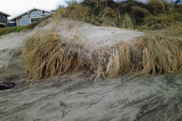 Example of wave overtopping and dune erosion due to storm activity and King Tides