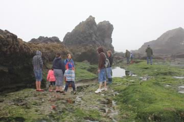 Ocean life among the rocks with Fawn Custer