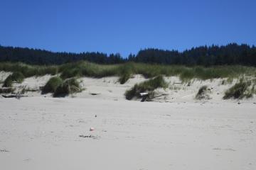 Small islands of remaining foredunes