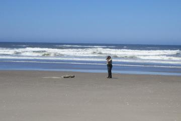 Forest Ranger checking on a resting baby elephant seal