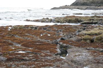 Rocks at low tide with seaweed or algae growth.