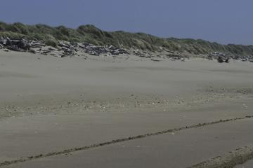 2-wheel and 4-wheel ATV tracks, lots of driftwood, foredune with both American and European beachgrass, shells in driftline.