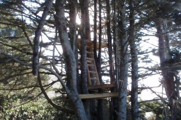 PT5 Tree Stand