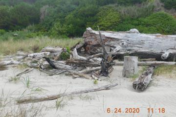 Driftwood leanto, after
