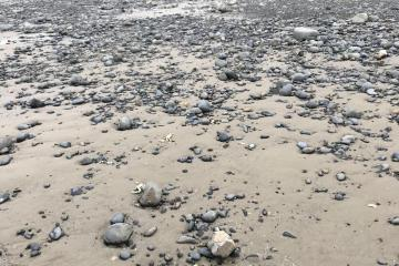 Only rock field observed on beach, full of agates