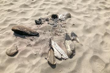 Driftwood campfire remains
