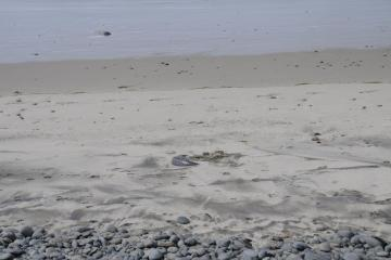 Buried tire in the sand