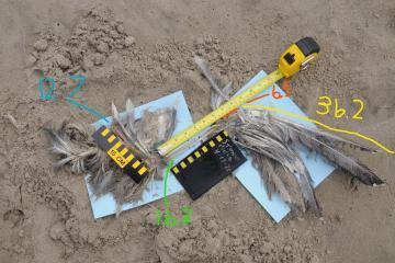 Wing of dead bird found on beach