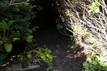 Hobbit hole in trail access to beach.
