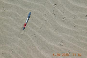 Plover tracks with pen