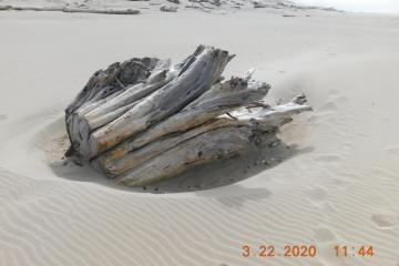 Tree trunk driftwood with new sand