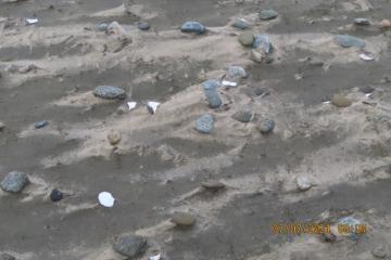 Wrack Small Stones